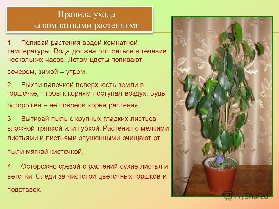 Уход за комнатными цветами в домашних условиях названия цветов